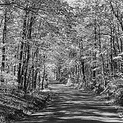 Old Foothill Parkway - Autumn - Great Smoky Mountains - Infrared Black & White