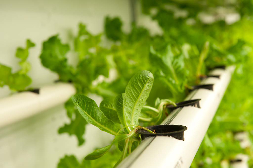 Urban farming in Atlanta: Podponics is a growing business producing watercress, arugula and other lettuce varieties hydroponically (in water, without soil) in recycled shipping containers.