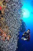 North Halmahera (North Malukkas) , Indonesia, Exploratory diving trip