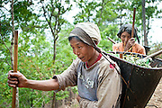 Naga people use baskets with tumplines to carry food, farming equipment, and just about everything else you can think of from village to village.