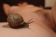 Snail crawling on a leg of a nude female model. Selective focus the snail is in focus while the model is out of focus
