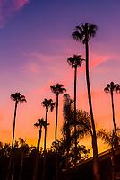 Palm trees silhouetted against an orange sky, Sherman Oaks, Los Angeles, California USA.