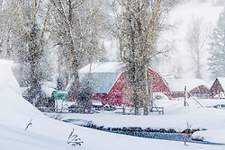 A red barn brightens up a snowstorm in Jackson Hole Wyoming.