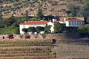 vineyard quinta do porto the house of dona antonia ferreira douro portugal