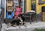 A street dog resting on the porch of a small corner store in Cerro Alegre, Valparaiso.