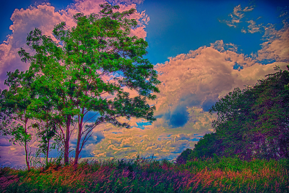 An impressionist take on a colorful field of splendor along a hiking trail at August A. Busch Memorial Conservation Area in Saint Charles Missouri