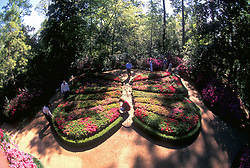 Stock photo of the butterfly shaped gardens at Bayou Bend.