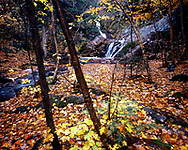 Chequamegon National Forest, Wisconsin, October, 1987.