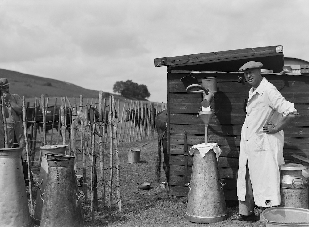 Cooling milk, A.G. Street's farm, Wiltshire, England, circa 1933