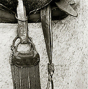 A Gauchos horse, Pampas District, Argentina