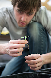 Danny Haymonds, agricultural apprentice, Incredible Edible Farm, Todmorden
