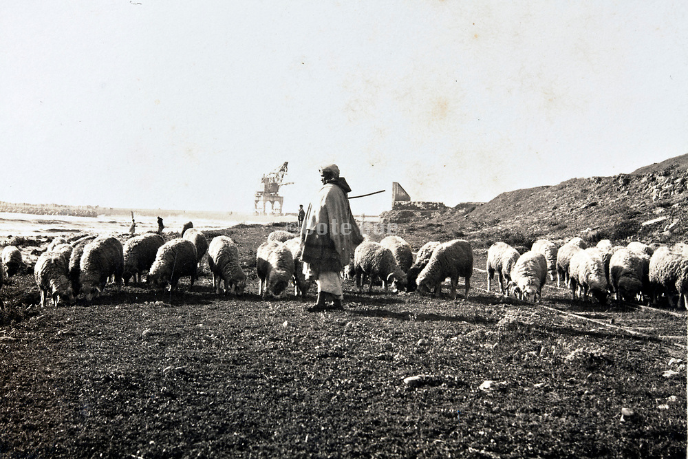 Moroccan sheep herder with his flock by the coast early 1930s