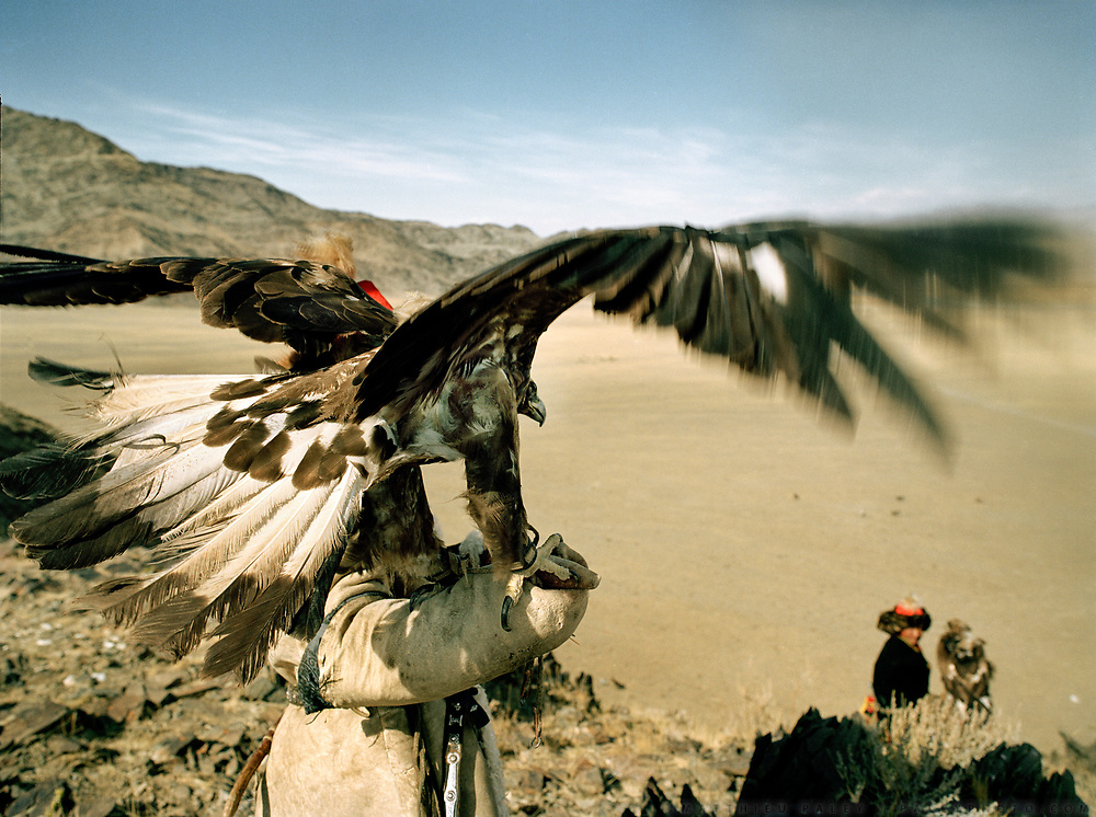 Releasing the eagle from a rock cliff. The eagle's wing span is about 1.5m.<br /> <br /> Eagle Hunting festival in Western Mongolia, in the province of Bayan Olgii. Mongolian and Kazak eagle hunters come to compete for 2 days at this yearly gathering. Mongolia