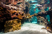 Coral Reef Aquarium, Xcaret Park (Eco-archaeological Theme park), Riviera Maya, Quintana Roo, Mexico