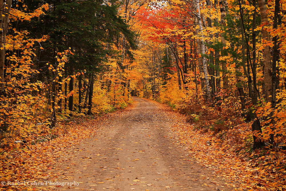 """""""Autumnal Harmony""""<br /> <br /> Pure autumn bliss on a rural country road!!<br /> <br /> Autumn Landscapes by Rachel Cohen"""