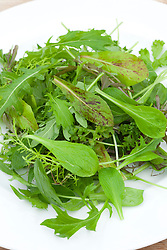 Winter baby leaf salad leaves on a plate including Mustard, Mizuna, Cress, Lettuce