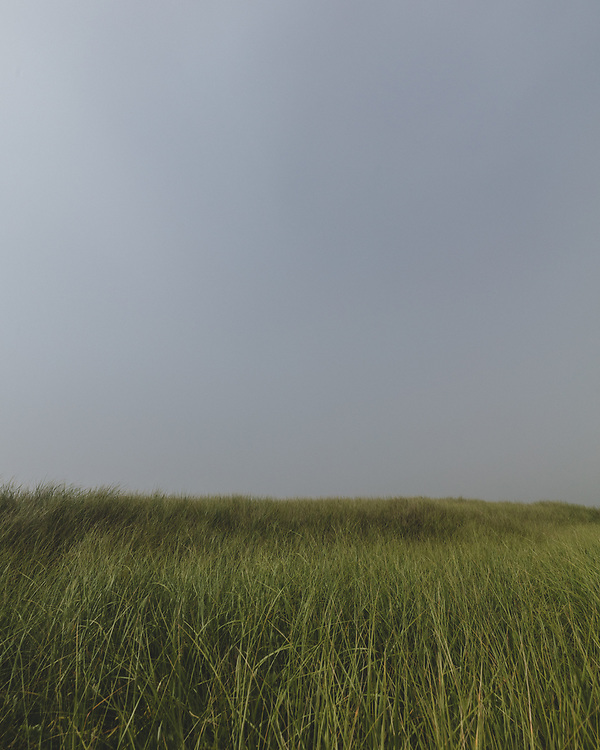 A flowing field of beach grass on the south side of Nantucket.