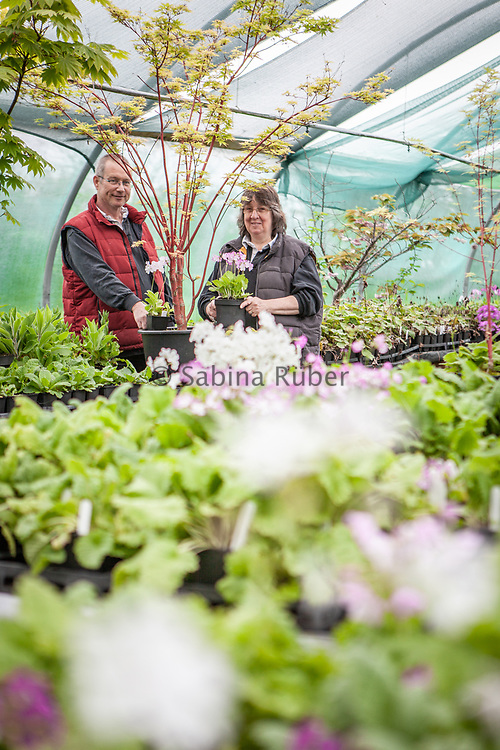 Penny & Melvyn Jones, Staddon Farm Nurseries (Penny's Primulas) - Holders of the Primula sieboldii Japanese cultivars, National Collection