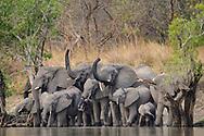 Elefantenfamilie (Loxodonta africana) am Lufupa Fluss in der Umgebung des Lufupa Camps im Kafue Nationalpark in Sambia beim Übergang zwischen Trockenzeit und Regenzeit.