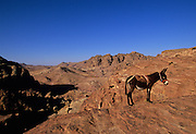 """A donkey stands near the """"High Place"""" in Petra, which was recently named one of the """"Seven Modern Wonders of the World"""" - Jordan."""