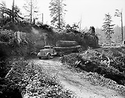 "ackroyd 04645-207. ""Van Vleet Logging. Cannon Beach. September 17, 1953"" (loaded Van Vleet log truck coming down curve on logging road from clearcut above Cannon Beach.)"