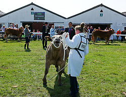 © Licensed to London News Pictures.16/07/15<br /> Harrogate, UK. <br /> <br /> A girl holds onto her bull during judging on the final day of the Great Yorkshire Show.  <br /> <br /> England's premier agricultural show has seen three days of showcasing the best in British farming and celebrating the countryside.<br /> <br /> The event which attracts over 130,000 visitors each year displays the cream of the country's livestock and offers numerous displays and events giving the chance for visitors to see many different countryside activities.<br /> <br /> Photo credit : Ian Forsyth/LNP