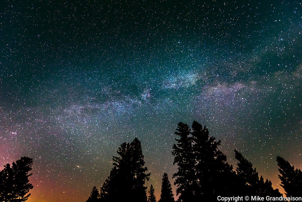 Milky Way Galaxy and starry night with white spruce (Picea glauca) in foreground.<br /> Birds Hill Provincial Park<br /> Manitoba<br /> Canada