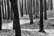 Nederland, Arnhem, 20-2-1986Een moeder maakt een wandeling met haar twee kinderen door het bos van het Arhemse park,  stadspark, Sonsbeek . Foto: Flip Franssen