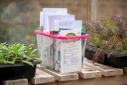 Organising seed packets in a box on a shelf in the greenhouse.