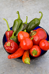 Pepper and Chilli collection. Peppers 'Topepo Rosso', 'Mini Red Skin', Chilli 'Jalapeno', 'Hungarian Hot Wax' and 'Cherry Bell'