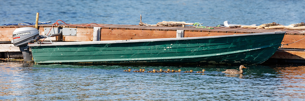 https://Duncan.co/ducklings-and-green-boat-at-the-dock