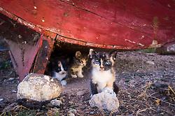 Cats underneath old fishing boat, El Jadida, Morocco.