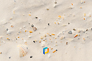 A detail of seashells in sand.
