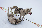 Dog sledding<br /> Longyearbyen<br /> Svalbard<br /> Norway<br /> Arctic Ocean