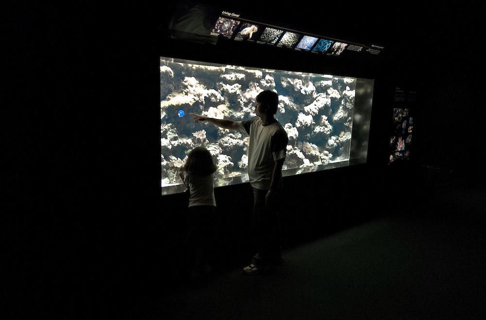 KWT.Kuwait,Kuwait City, Sea world  Seewelt Aquarium, Ein Mann zeigt einem Mädchen eine blauen Fisch in einem Aquarium  |  KWT.Kuwait,Kuwait City, A man points at a blue fish in an Aquarium  |