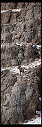 Vertical panorama with two big horn rams on ledges near Jackson Hole, WY.