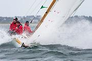 Gamecock sailing in the Opera House Cup regatta.