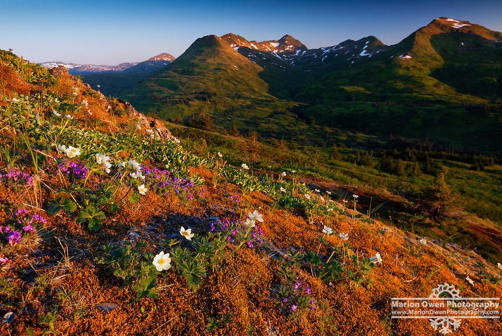 Mid-summer sunrise on Pillar Mountain behind Kodiak, Alaska.