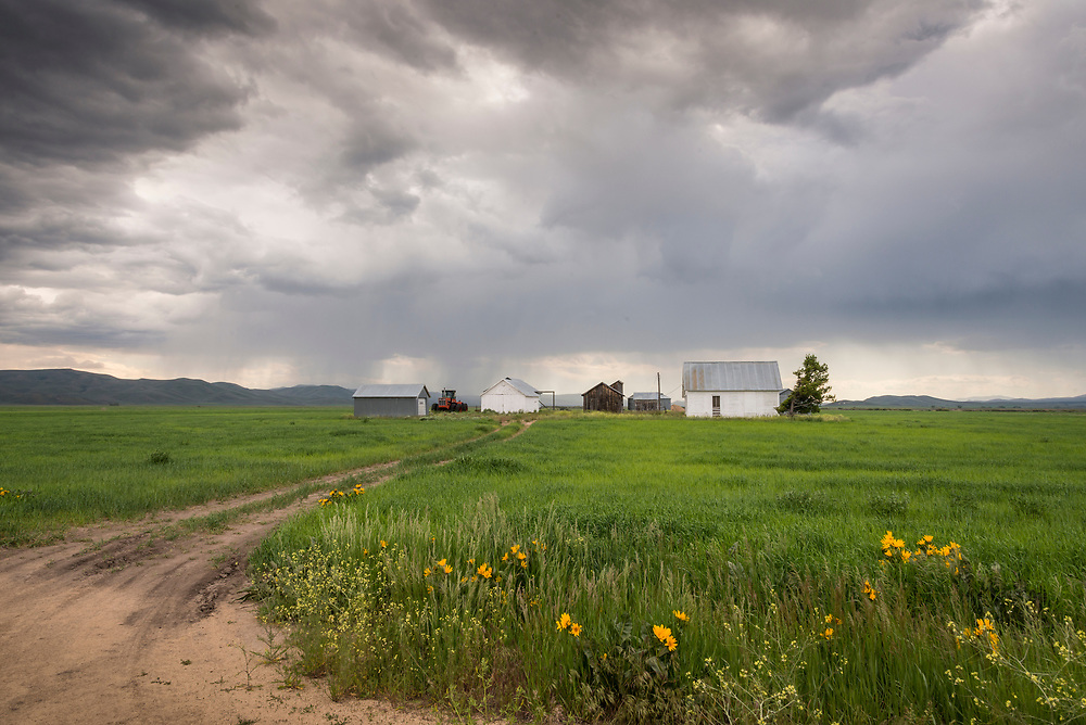 A spring storm breaks above a rural farm yard and green field on the Camas Prairie in Southwest Idaho. Licensing and Open Edition Prints.
