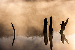 Morning fog on spring-fed pond and tree stumps in water, Hill Country between Blanco and Fredericksburg, Texas, USA
