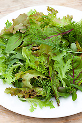 Summer baby leaf salad leaves on a plate. Wild rocket, Mustard, Sorrel, Lettuce, Carrot leaf