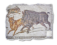 First half of the 3rd century AD Roman mosaic depiction  a wild boar and hare hunt. From Hadrumetum (Sousse), Tunisia.  The Bardo Museum, Tunis, Tunisia. White Background. .<br /> <br /> If you prefer to buy from our ALAMY PHOTO LIBRARY  Collection visit : https://www.alamy.com/portfolio/paul-williams-funkystock/roman-mosaic.html - Type -   Bardo    - into the LOWER SEARCH WITHIN GALLERY box. Refine search by adding background colour, place, museum etc<br /> <br /> Visit our ROMAN MOSAIC PHOTO COLLECTIONS for more photos to download  as wall art prints https://funkystock.photoshelter.com/gallery-collection/Roman-Mosaics-Art-Pictures-Images/C0000LcfNel7FpLI