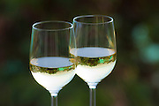 Photographic art of wine glasses