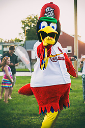 Hey, wait a minute, how did Fredbird sneak his way into the birds catalog?
