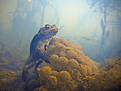 Pond Life Photography - Somerset & Bristol