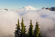 Mount Baker rises above low clouds and a stand of pines, as seen from Damnation Peak, North Cascades National Park, Washington.