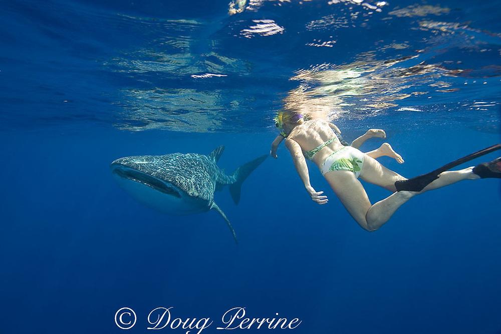woman and child with friendly whale shark ( Rhincodon typus ), Kona Coast of Hawaii Island ( the Big Island ) Hawaiian Islands, USA ( Central Pacific Ocean ) MR 360-361