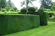 A fabulously sculptural clipped yew (Taxus baccata) hedge surrounding the formal West Garden at Hatfield House. The rounded blocks of yew at the four corners are topped with pebble-like flattened spheres.<br /> <br /> The extensive gardens at Hatfield House were begun by Robert Cecil (and his plant-hunter John Tradescant) in the early 17th century. The gardens were significantly restored and expanded in Victorian times.<br /> <br /> Date taken: 05 July 2013.