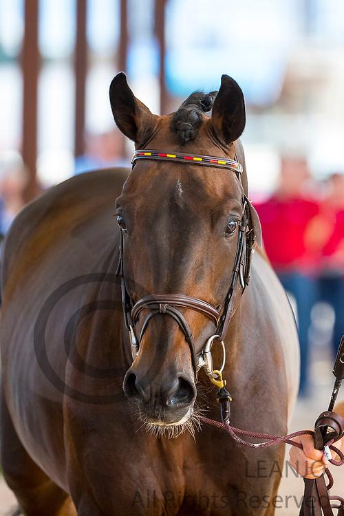 Maurice Tebbel - Don Diarado<br /> FEI World Equestrian Games Tryon 2018<br /> © DigiShots