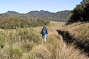 Woman walker in Horton Plains national park montane grassland environment, Sri Lanka, Asia